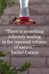 Rachel Carson quote